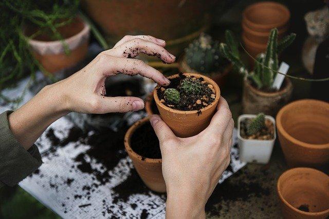 Zahradničení je ideální hobby pro všechny generace