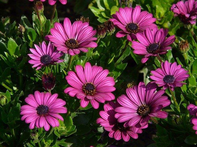 fialové kytičky